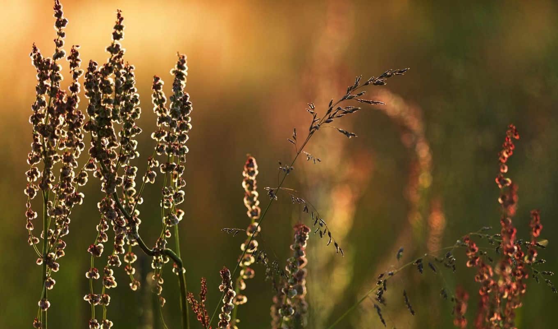 трава, луг, графика,
