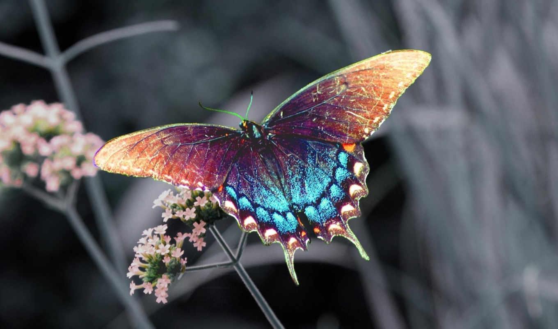 бабочки, самые, бабочка, цветы, коллекция,