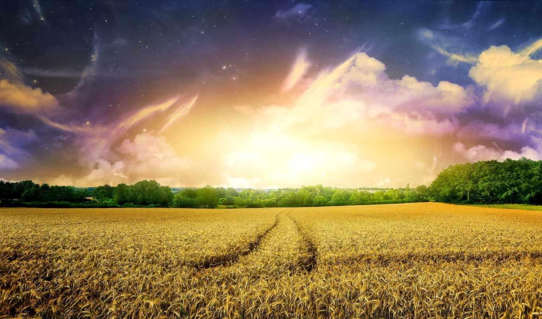 поле, найти, наши, быстро, следующим, тегам, rye,