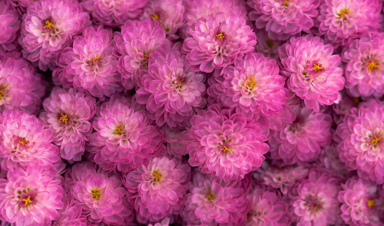 команда, color, kwiaty, kategorium, telefon, маки, pulpit, tapetum, цветочек, цветы