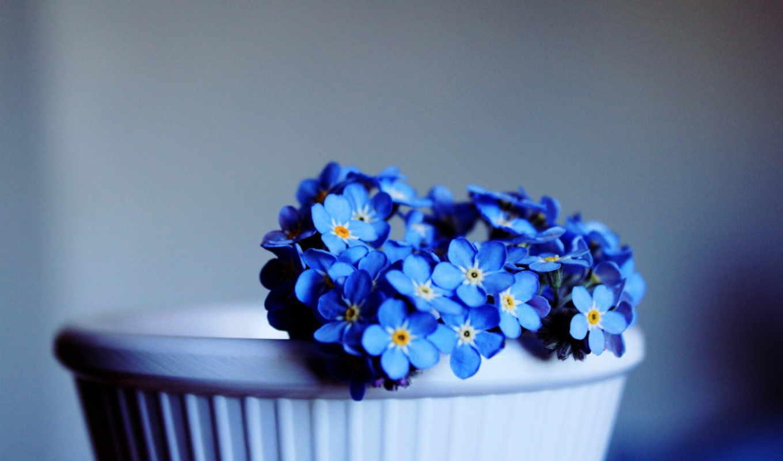 обои, незабудки, текстура, цветы, фото, рисунки, о