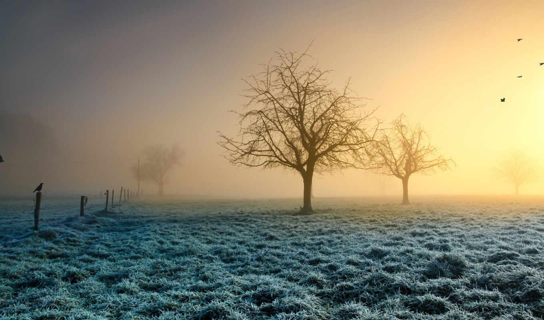 солнце, трава, птицы, иней, деревья, картинка, nature,