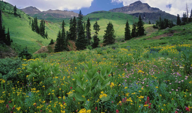 луг, зелёный, alpine, цветы, browse,