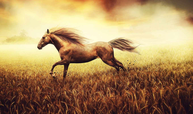 лошадь, лошади, поле, золотом, грациозная, лошадей, страница, год, гороскоп,