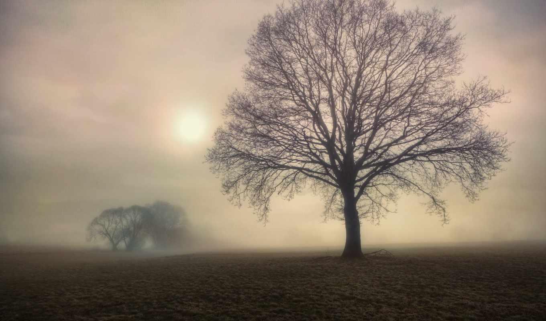 туман, утро, поле, деревья, дерево, пожалуйста, янв,