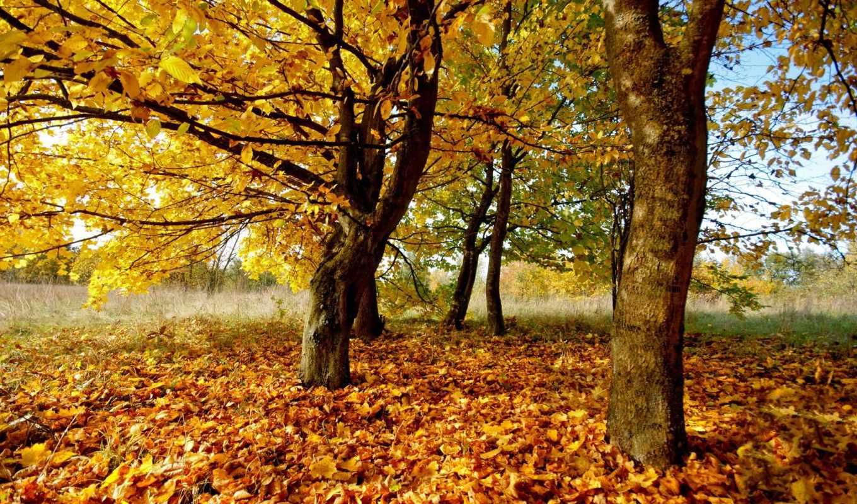 осенние, осень, деревя, природа, листья,