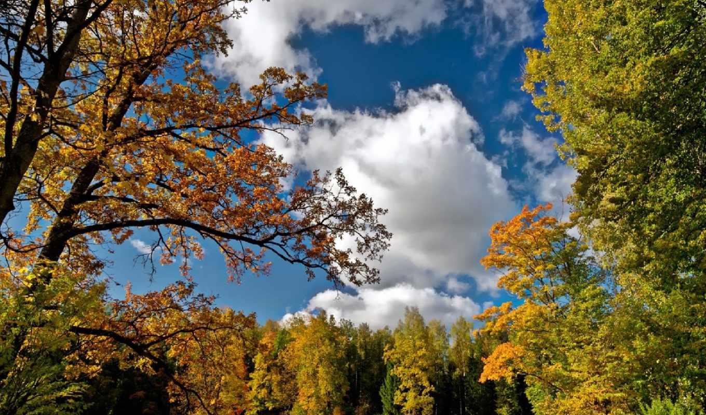 лес, осень, небо, fone, природа, trees, неба, озеро, голубого, лист,