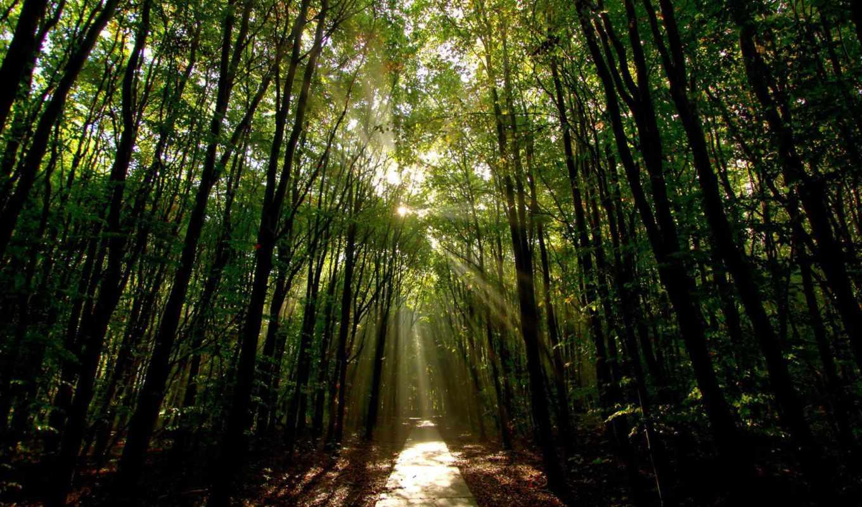 airena, солнечных, природа, лучах, света, природные, фотографии, пейзажи, have, minus, must,