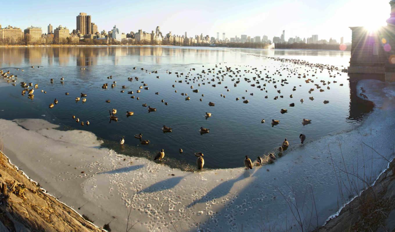 reservoir, park, центральный, icy, день, рулоны,