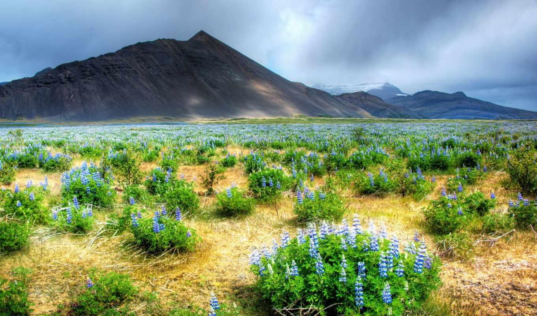 горы, landscape, природа, поле, цветы,