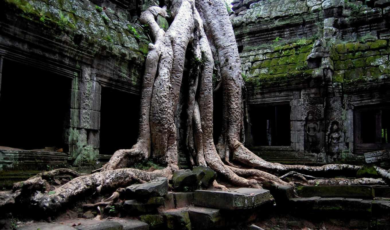 фотообои, prohm, страница, нашем, angkor, ta, стену, море, мрачные,