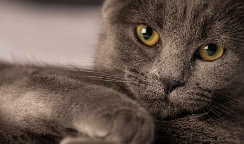 коты, милые, кошки, экран, котята, весь, умилительное, фотографий, красивые, house,