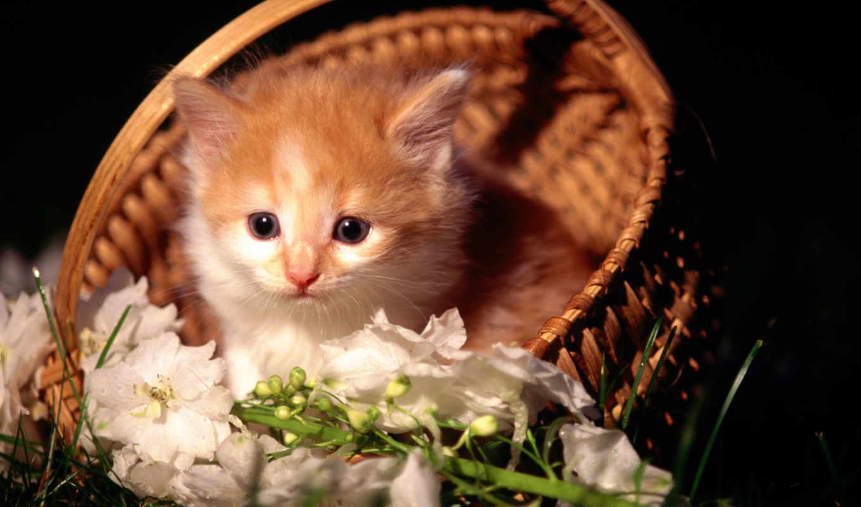 گربه, عکس, you, های, кошки, котёнок, minus, with, animals, ò³, basket, ъцә, корзинке, цветами, hd, wallpaper, cats, descargar, їнжбрўгёрҳхжчагж, красавец, часть, jdjgsmjd, share, похожие, рыжий, котен
