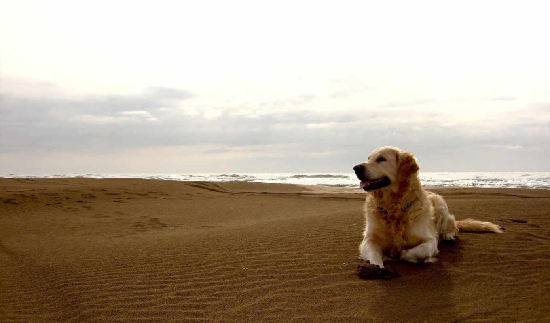 обои, собака, собаки, пляж, красивые, фото, друг,