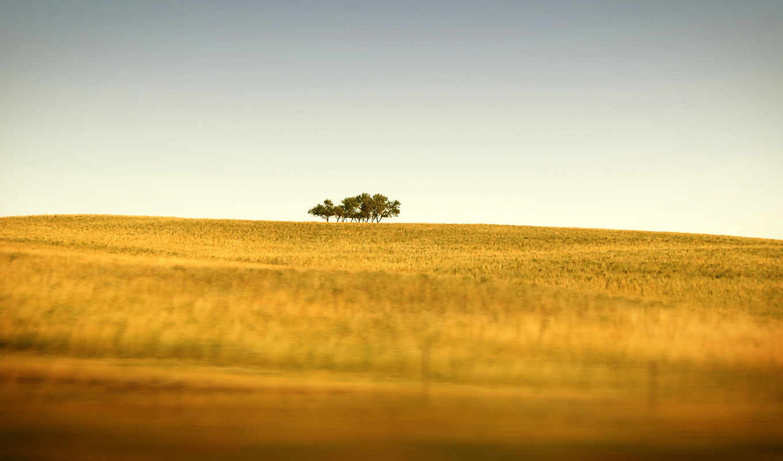trees, wallpaper, nature, hd, only, saskatchewans, canada, wallpapers, الطبيعة, background, autumn, field, free, пейзажи, природа, desktop, поле, wild, download, full, дальше, saskatchewan,