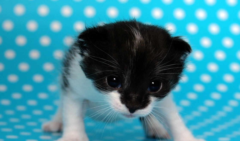 они, очень, кошки, картикни, котикав,