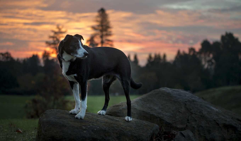 камень, hound