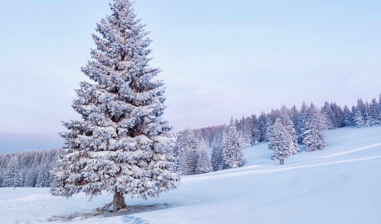 природа, фото, снег, пейзажи, елка,