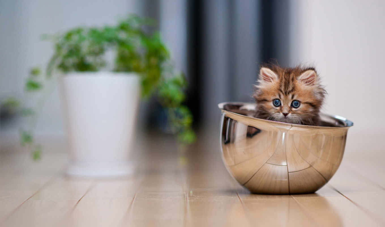 котенок, чашка, посуда, картинка, картинку, кот, котята, так, картинками, июня,
