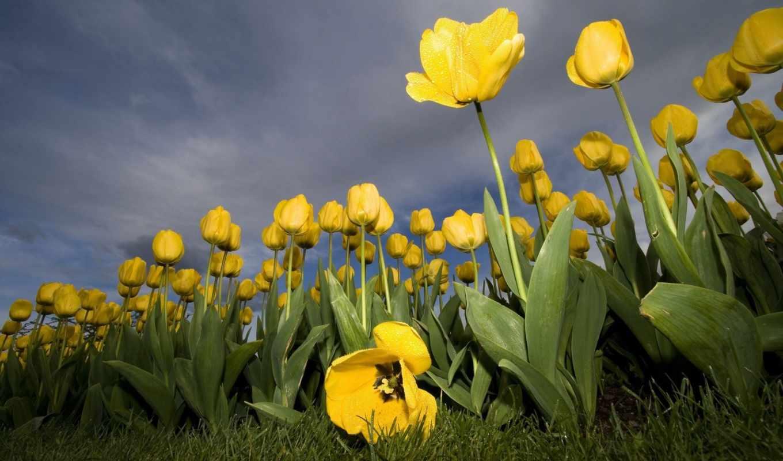 just, цветы, разную, красивые,