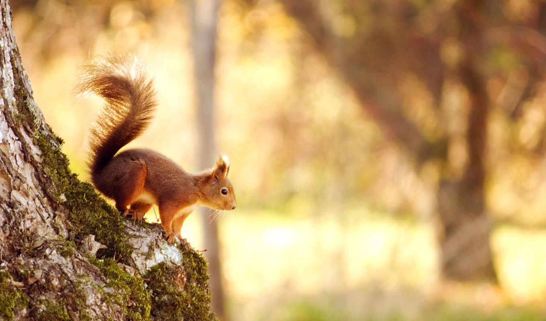 боке, белки, дерево, природа, bokeh, лес, свет,
