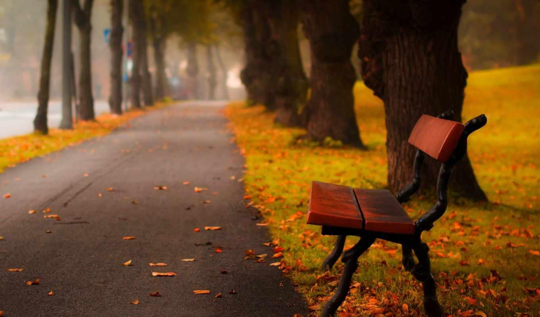 осень, широкоформатные, листья, разрешением, тона, windows, компьютера, желтые, лес, скамейка, colorful, пасть, бесплатные, природа,