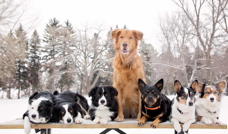 собак, овчарка, meradog, средний, друзья, бесплатные, щенок, немецкая, высококачественных,