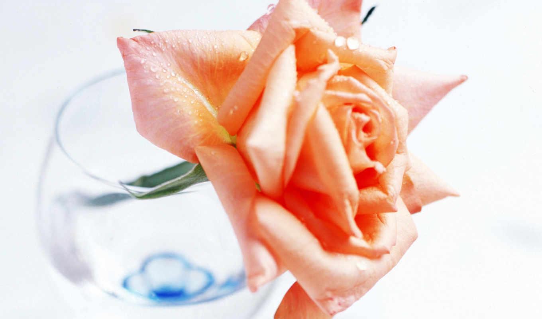 xhtx, flowers,