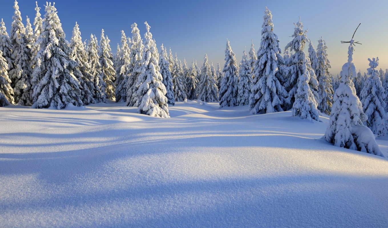 снег, winter, дек, природа, лес,