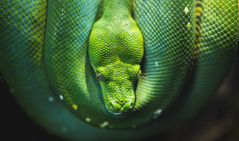 , green, snake, зненный,