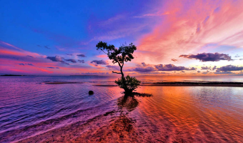 природа, красивая, море, манящая, горизонт, trees, яркая, обжигающая, прекрасная,
