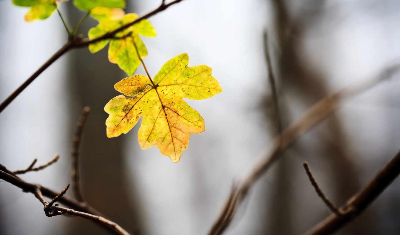 листики, осень, добавил, minus,