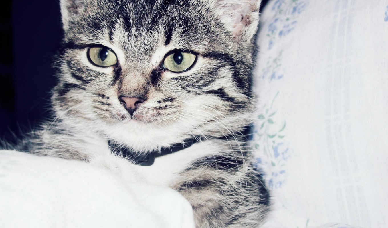 desktop, кот, животное, домашнее, wallpapers, cute, bed, kitty, wallpaper, животные,,,