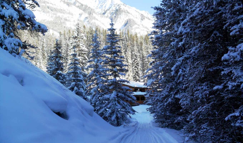 деревья, природа, канада, горы, winter, снег, ёль, банф, облака, парки,
