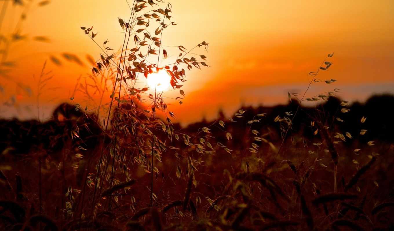 sun, закат, трава, макро,