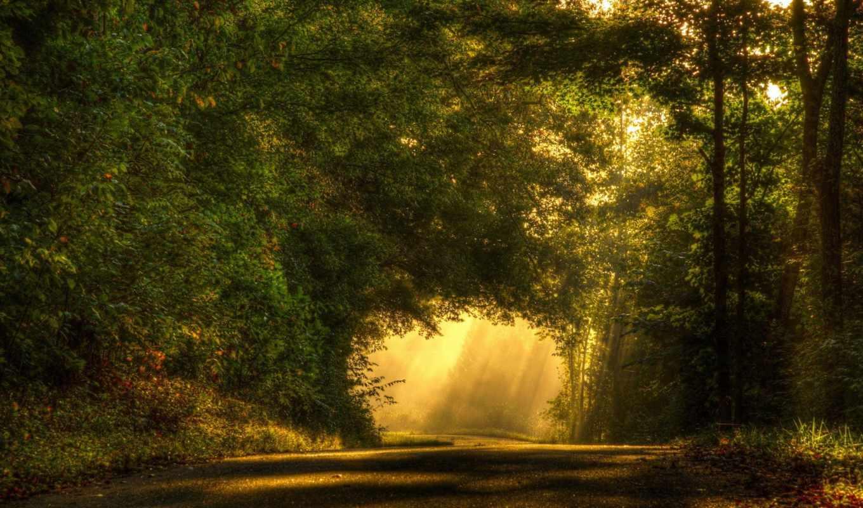 лес, rays, свет, sun, природа, relaxing, дорога, природой, дерево,