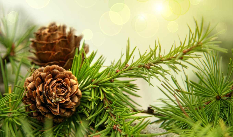 годом, новым, рождеством, христовым, год, new, поздравления, postcard, christmas, різдво, свитарт,