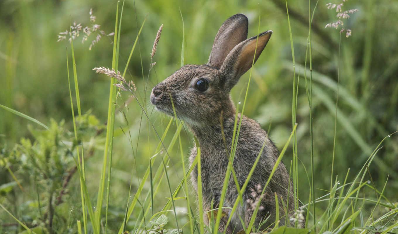 заяц, зайцев, траве, зайцы, white, zhivotnye, зелёный, яndex, трава,