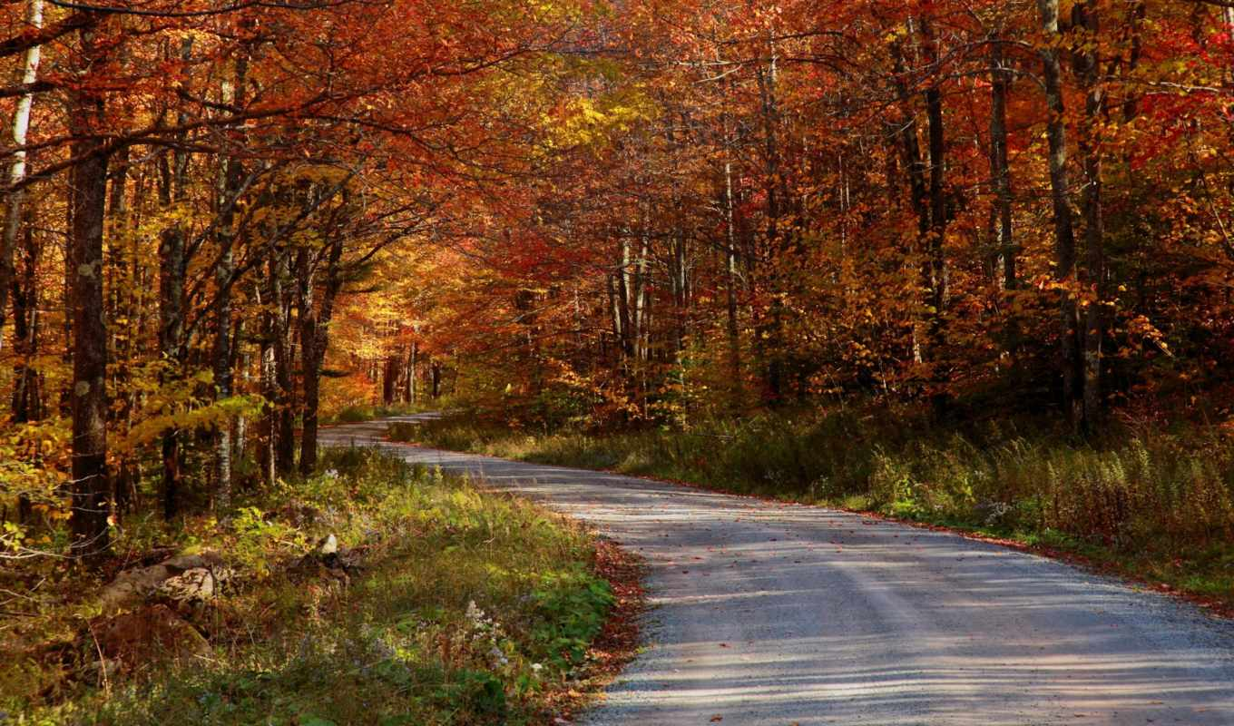 country, autumn, roads, road, take, home, nature, forest, download, леса, дороги, free, времена, picture, live, года,