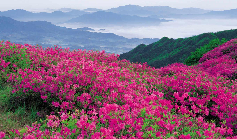 цветы, горные,