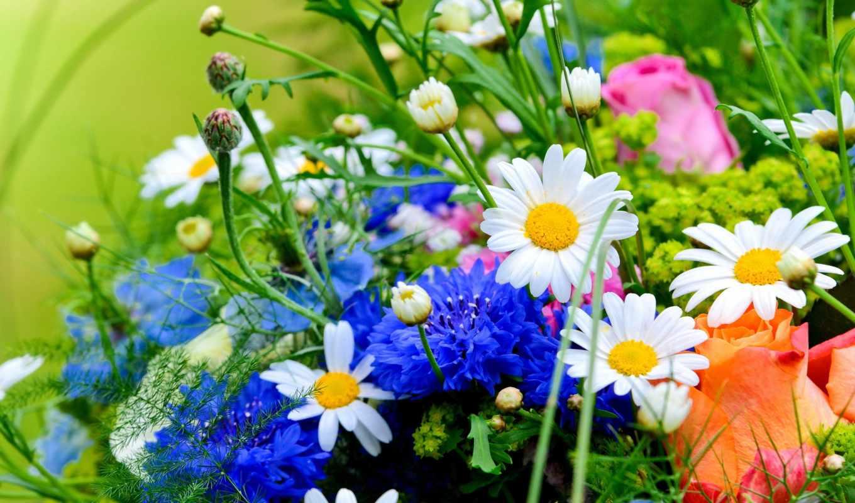 flowers, herbs, resolution,