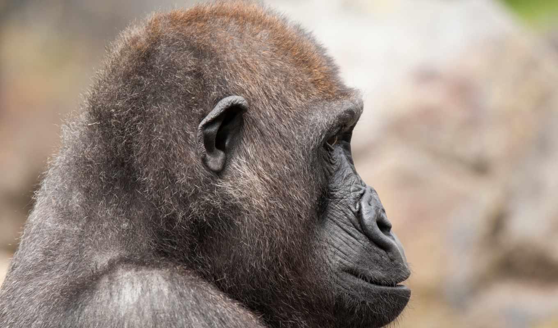 canonef, животные, mmf, bioparc, страница, тематика, картинкой, можно, zoo,