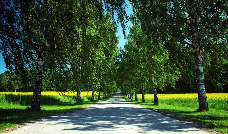 природа, summer, trees, дорога, рапс, margin, норвегия, картинка,