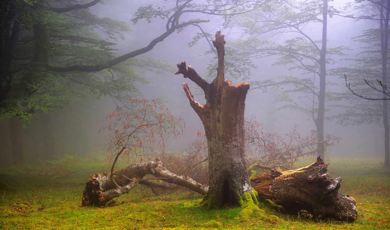 природа, лес, туман, summer, дымка, ук,