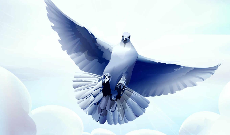 голубь, white, птицы, небо, голуби, zhivotnye, птица, небе, flying, заказать,
