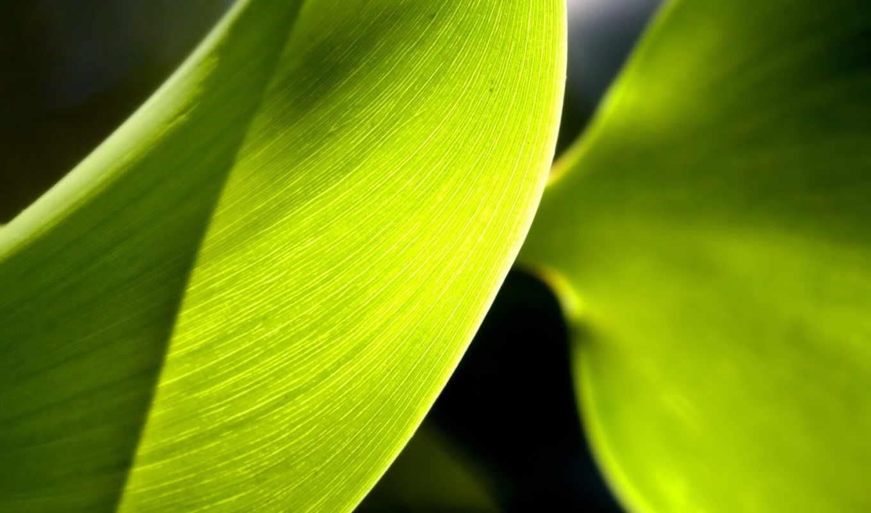cho, растительность, разные,