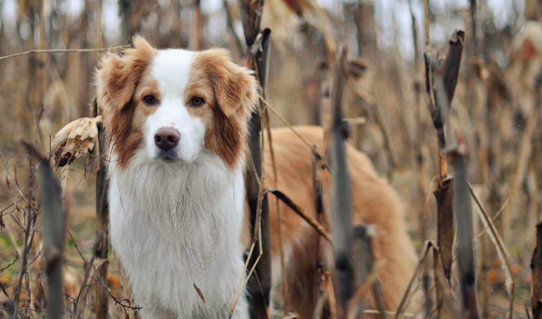 собака, природа, друг,