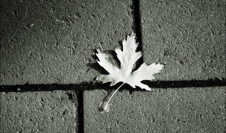 лист, кленовый, плитка, асфальт,