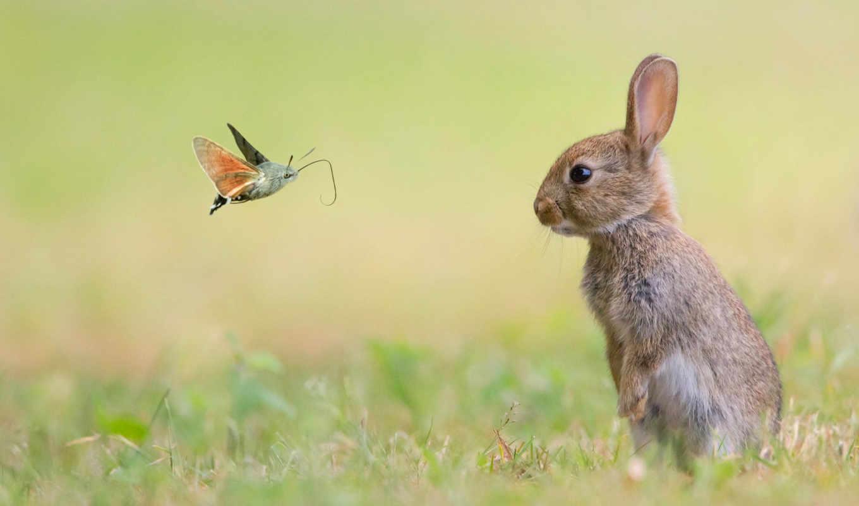 small, кролик, кролики, бабочка, вася, zhivotnye, фотографий, заяц,