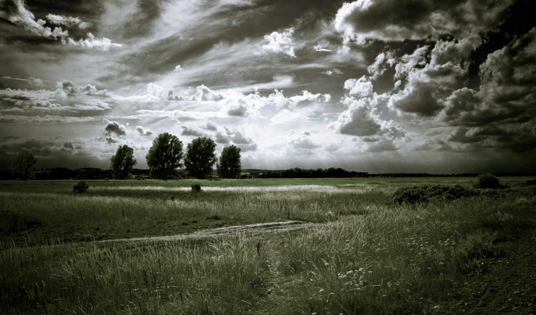 чёрно, белые, trees, серость, oblaka, landscape,